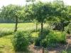 Finurligt med Äppelträd