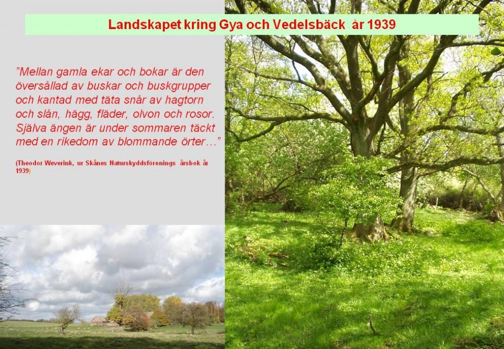 Naturskyddsföreningens årsbok 1939 om Gyaskogen