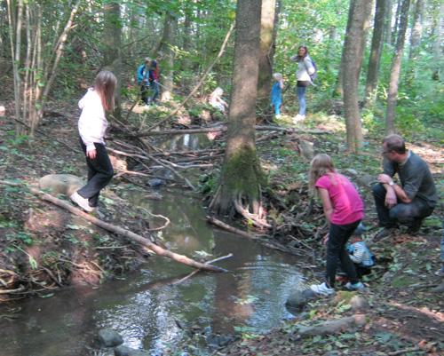 skogsskoj vid bäcken
