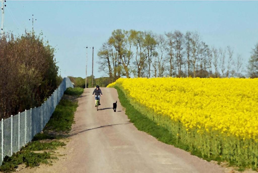 cykel och vandringsled till Ringsjön